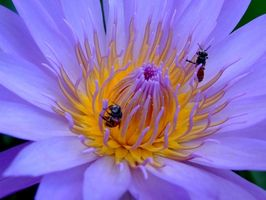 Come Process & Pacchetto Bee Pollen