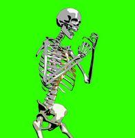 Le ossa che compongono l'articolazione dell'anca