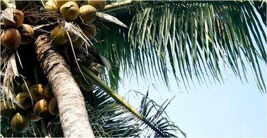 Come abbassare di zucchero nel sangue con olio di cocco