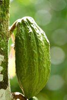 Cosa serve per fare il cioccolato da semi di cacao?