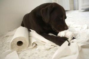 Che cosa significa quando un cucciolo mangia tutto?