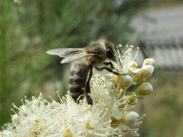 Segni e sintomi di insetti punture