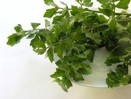 Come faccio a fare di erbe Lice deterrente?