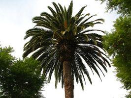 Effetti sulla salute di olio di palma nella dieta
