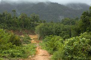 Medicina piante dalla Foresta Amazzonica