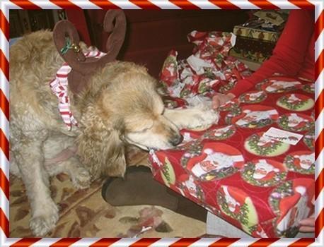 Grandi regali di Natale idee per il vostro cane