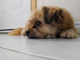 Home Rimedi per Dog Allergie