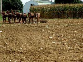 Pro & Contro di agricoltura biologica