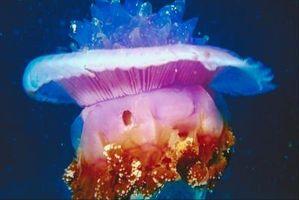 Come risolvere una medusa Sting