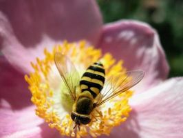 Quanto tempo può sopravvivere un Bee interna?