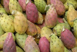 Che tipo di cactus è buono da mangiare per il diabete?
