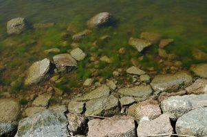 Come pulire acquari con le alghe