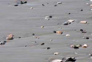 Come Caccia Spiagge per Galleggianti di vetro per la pesca