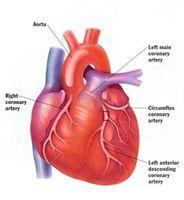 Come funziona la malattia di cuore influisce Come funziona il cuore?