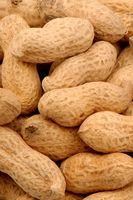 Usi per Roots Peanut vegetali