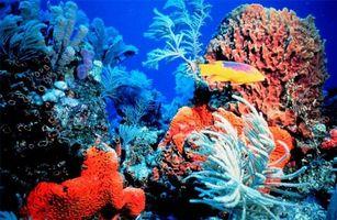 Gli effetti negativi di calcio di corallo