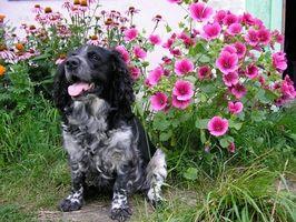 Allergia al cane urina