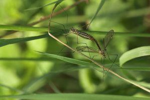 Naturale repellente della zanzara per i bambini