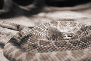 Homemade Rattlesnake repellente