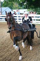 Come acquistare SaddleSeat Horse Show vestiti a prezzi di affare