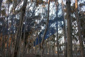Dove potete comprare Lemon Eucalyptus Oil?