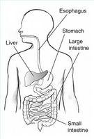 Alimenti per reflusso acido soccorso