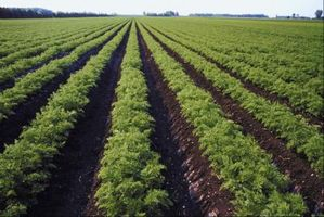 Quali sono i vantaggi della tecnologia alimentare?