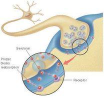 Aumentare i livelli di serotonina