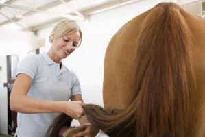 Come mantenere un cavallo dal masticare Another Tail