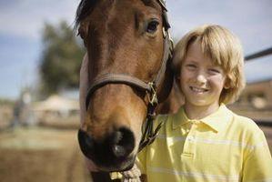Come mantenere un Water Horse Trough pulito con candeggina