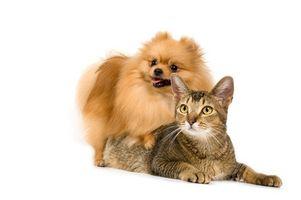 I sintomi Ecoli Giardia in un Cane & Gatto
