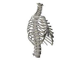 Cosa succede al chiropratico?