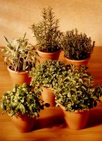 Importanza delle piante medicinali