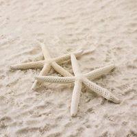 Quali sono i Friends & Enemies di Starfish?