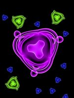 Lactobacillus Caratteristiche