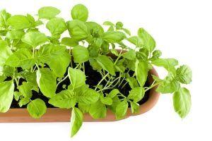 Come prevenire l'osteoporosi con le erbe