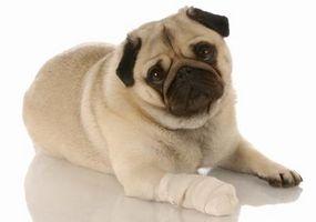 Come fermare l'emorragia, se si taglia le unghie dei piedi del cane Too Short