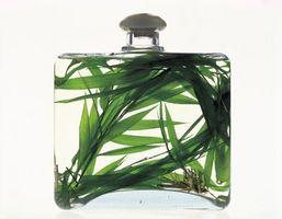 Quali sono gli effetti cutanee di Estratte Tea Tree Oil?