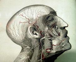 Primo trattamento Aiuti per shock da trauma cranico