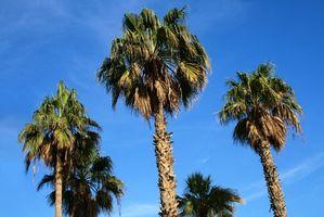 Allergie a Palm Kernel Oil
