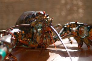 Come ordinare Seafood & Lobster per essere spediti Pernottamento