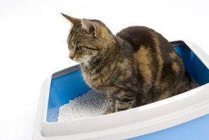 Problemi di salute umana, con scatole lettiera per gatti