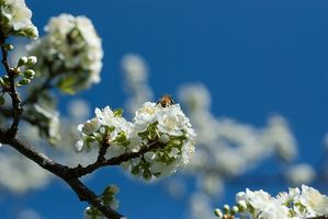 Bee Propolis & Infezioni