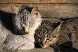 Come superare la paura di gatti