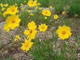 Come utilizzare antistaminici naturali per trattare le allergie polline