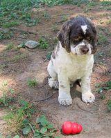 Quali sono i trattamenti per pidocchi a cuccioli?