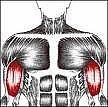 Come ridurre indolenzimento muscolare dopo un allenamento