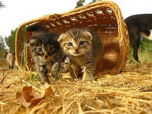 Pet Products 101: Nuove leggi che richiedono la sterilizzazione dei gatti in Rhode Island