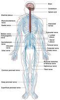 Quali sono le cause paralisi?