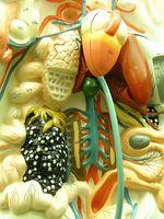 Parti del corpo affetti da malattia coronarica
